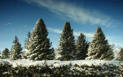 Imagenes de Navidad: Paisaje de nieve gratis